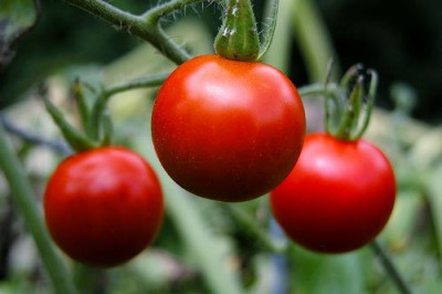 Tomatoes, courtesy Flickr user Ben McLeod