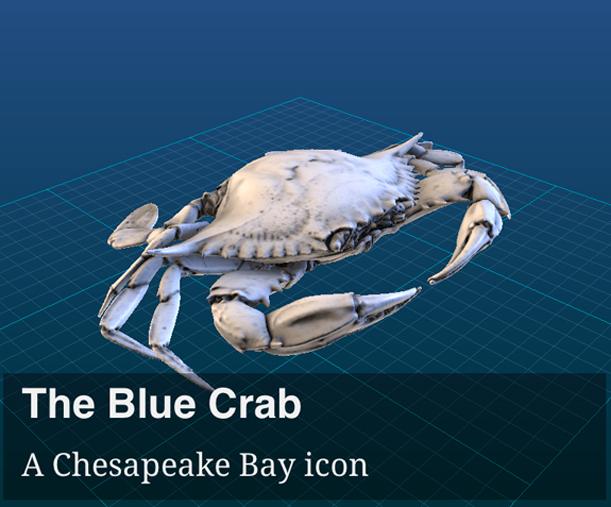3D blue crab