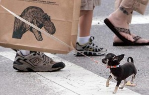 A Robert Walters drawing on a museum shopping bag frightens a tiny dog