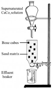 The bone cube experimental setup. From Daniel and Chin, 2010.