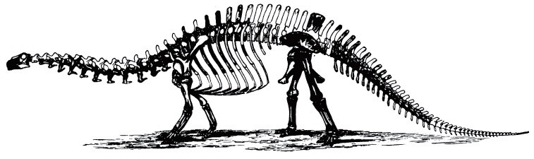O.C. Marsh Brontosaurus illustration