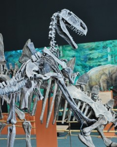 A Monolophosaurus attacks a Tuojiangosaurus at the Chinasaurus exhibit. Photograph by Brian Switek.
