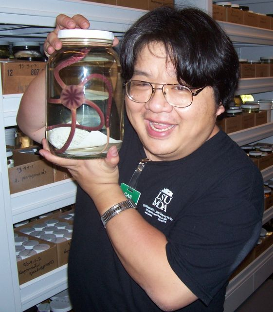 "Starfish are ""the stars"" of invertebrate zoologist Christopher Mah's Echinoblog."