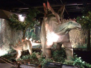A pair of Stegosaurus at the Cincinnati Museum. From Flickr user RubyNuby.