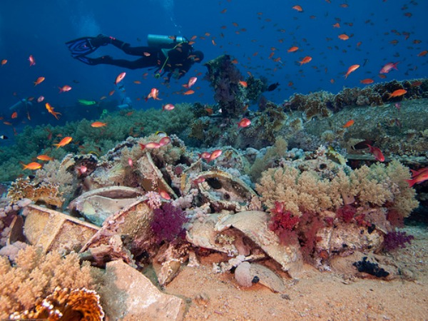 How We Can Save Coral Reefs and Why We Should