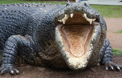 http://blogs.airspacemag.com/daily-planet/files/2012/11/crocodile1.jpg