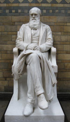 Charles Darwin at museum. Photo by Sarah Zielinski