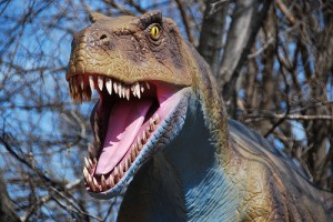 An animatronic theropod dinosaur on display at the Brookfield Zoo. The list of robotic dinosaurs which will be present in Alberta's Jurassic Forest has not yet been announced. From Flickr user jimdeane.