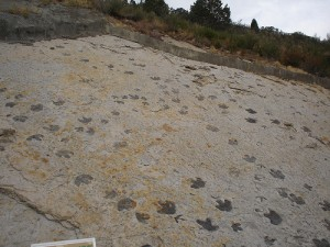 Dinosaur tracks at Dinosaur Ridge. From Flickr user Matthew Saunders.
