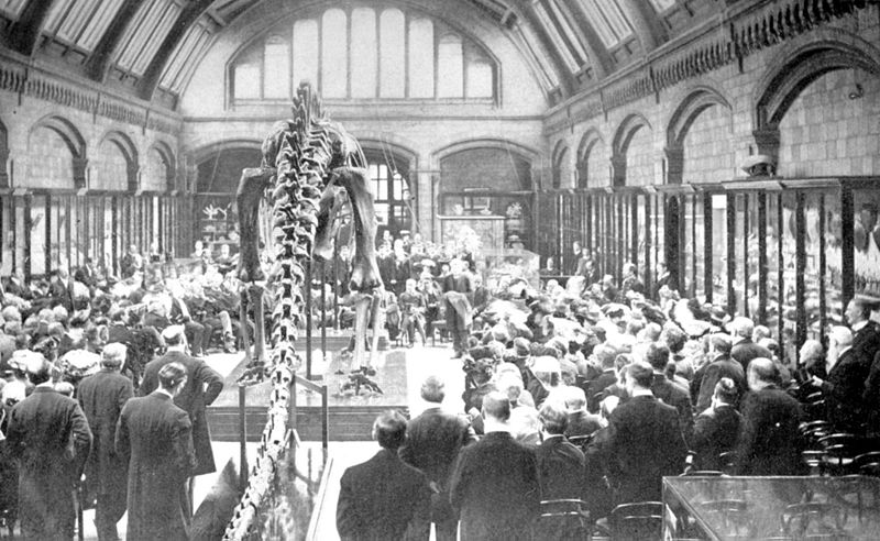 The unveiling of Carnegie's Diplodocus at the British Museum in 1905. From Wikipedia.