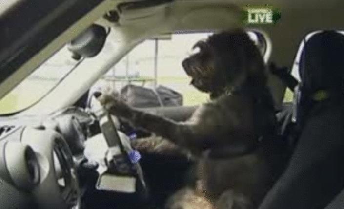 Ass in the steering wheel - 3 6