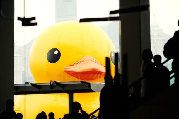 Duck closeup