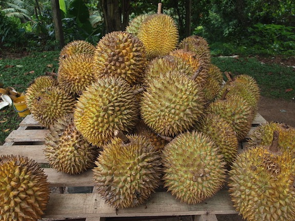 Why Does the Durian Fruit Smell So Terrible? | Science