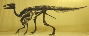 The skeleton of Edmontosaurus. From the Palaeontologia Electronica paper.