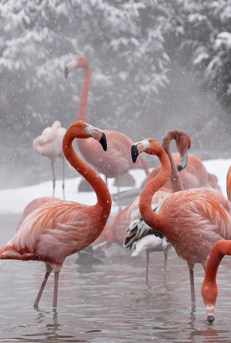 Even the flamingos are chilling out.