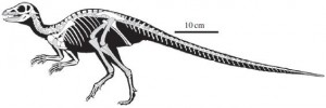 A restoration of Fruitadens. From the Proceedings of the Royal Society B paper.