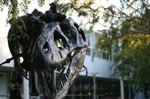 The Tyrannosaurus at the Google campus in Mountain View, CA. From Flickr user Myles!