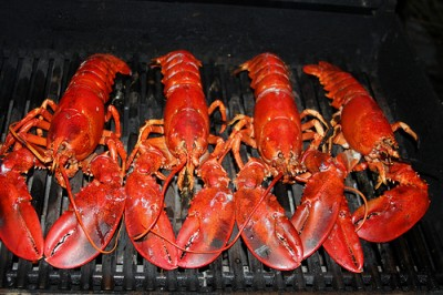 Grilled Maine lobster, courtesy Flickr user Dana Moos
