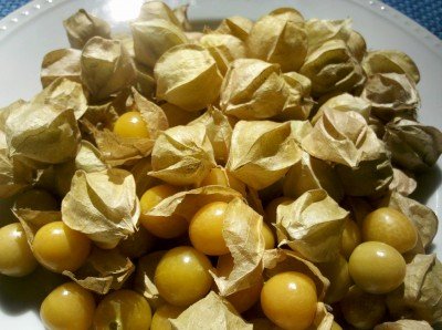 Ground cherries. Photo by Amanda Bensen.