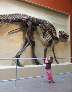A child poses next to the skeleton of a hadrosauroid dinosaur. From Flickr user Clover 1.
