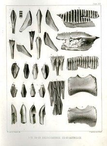 A lithograph showing some of the first Hadrosaurus fossils. From Wikipedia.