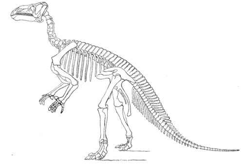 The skeleton of Iguanodon from O.C. Marsh's The Dinosaurs of North America. Iguanodon is just one of the dinosaurs that will be studied by the Open Dinosaur Project.