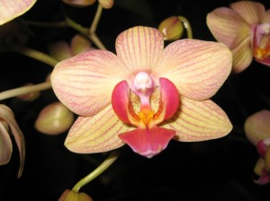 An orchid at the Smithsonian. Photo by Sarah Zielinski