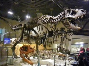 Fossil from Tokyo Science Museum. Courtesy of Archosaur Musings.