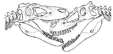 A restoration of Jane (right) being bitten on the face by a tyrannosaur of about the same size. From the Palaios paper.