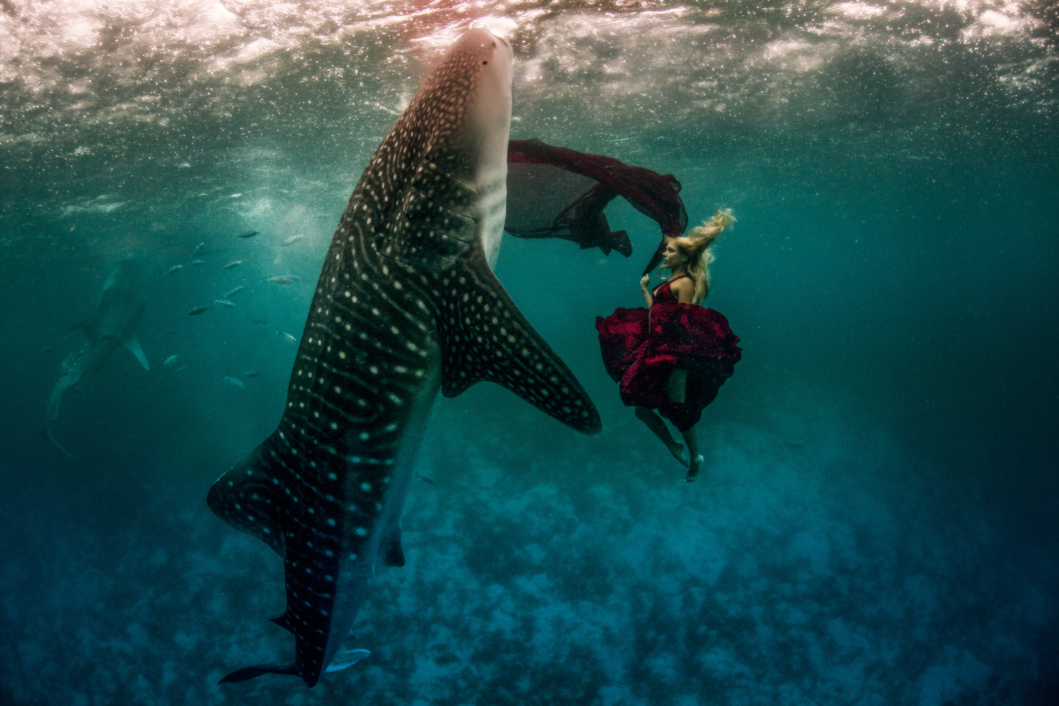 how-to-edit-underwater-photos-in-photoshop-image-retouching-sample