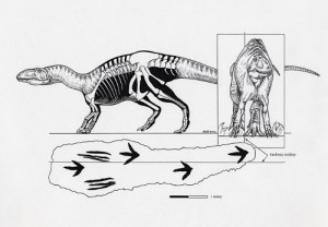 "A theropod trackway showing the palms-down ""manus strike."" Image courtesy of Michael Skrepnick."