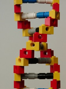 DNA in LEGO (courtesy of flickr user mknowles)