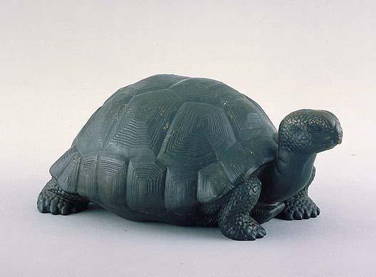 manship_tortoise_AAM_oct16