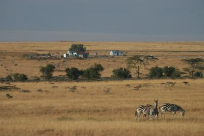 Zebra at the edge of Masai Mara National Reserve (Credit: ILRI)
