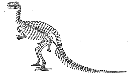 it is difficult to look at the skeleton of a dinosaur and not imagine what it might have been like when it was alive what color was it