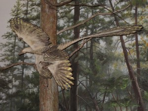 A restoration of the feathered dinosaur Microraptor flying through the trees. From Flickr user Cryptonaut.
