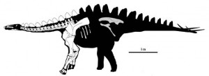 Miragaia, a new long-necked stegosaur. From the Proceedings of the Royal Society B paper.