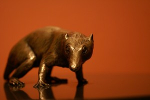 A sculpture of the early mammal Morganucodon on display at the Smithsonian's National Museum of National History. From Flickr user Arbitrary.Marks.