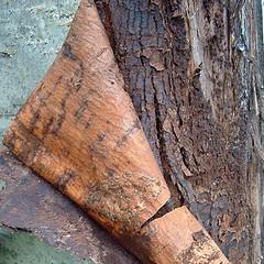 Mountain ash bark, courtesy of Flickr user sbpoet