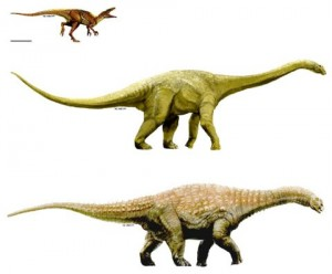 Australovenator, Wintonotitan, and Diamantinasaurus. From the PLoS One paper.
