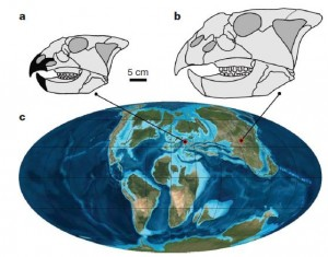 The reconstructed skulls of Ajkaceratops (a - black sections representing discovered bones) and Magnirostris (b), with lines indicating their location on the globe 80 million years ago. From the Nature paper.