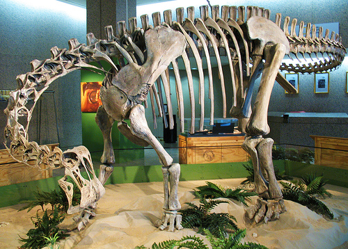 The skeleton of the weird sauropod Nigersaurus. From Flickr user Mr. T in DC.
