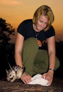 Researcher Stephanie O'Donnell releases a quoll trained to dislike the taste of cane toads (courtesy University of Sydney)