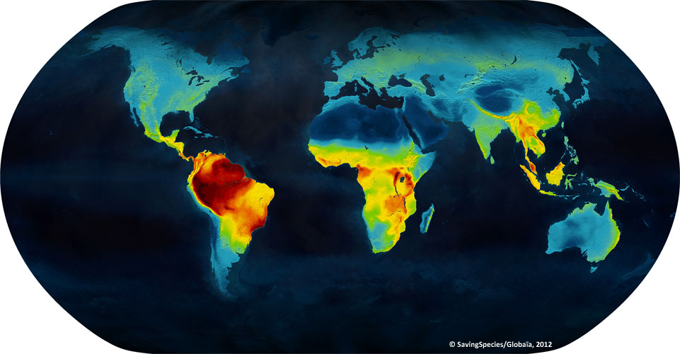 These Beautiful Maps Show Where All Known Birds Mammals And – Live Global Map