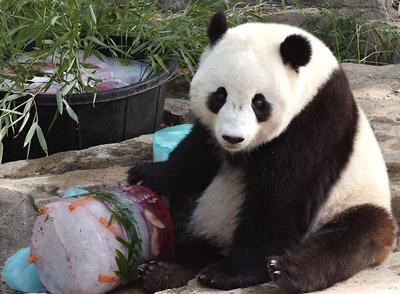 pandabday_zoo_dec43