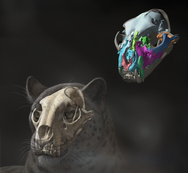 This Fossil Skull Unearthed In Tibet Is The Oldest Big Cat Ever