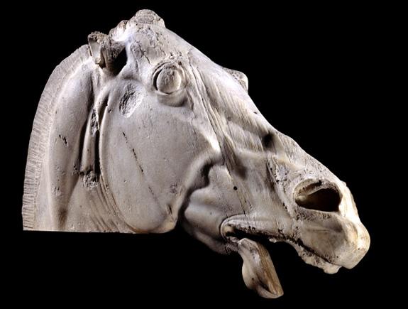 Elgin Marbles horse