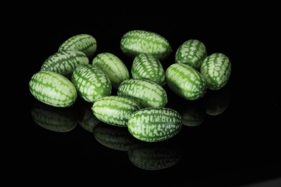 Bite-sized Pepquiños. Photograph courtesy of Koppert Cress USA.