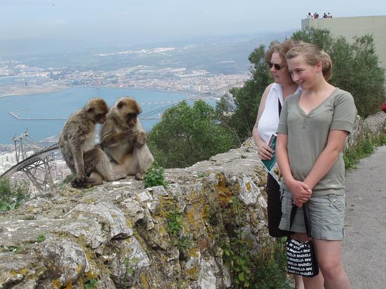 Why do we still have monkeys