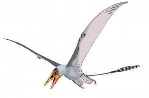 An artist's restoration of the pterosaur Sordes. From Wikipedia.